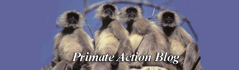 Primate Action Blog
